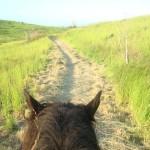 Balade et promenade à cheval à la Réunion 974